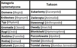 Systematyka owadów.
