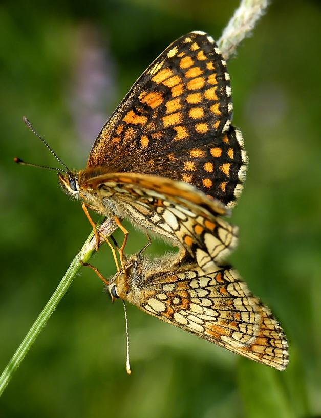 I ostatnie zdjecie tego motyla.