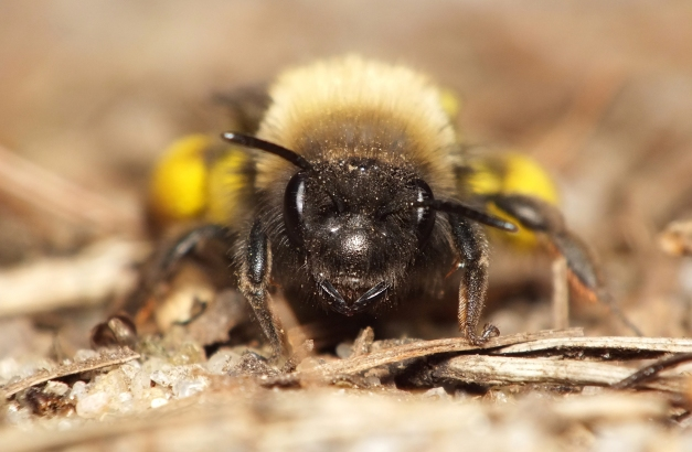 Portret pszczolinki.