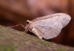 Samczyk ze złożonymi skrzydłami.