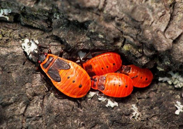 Młode osobniki w szczelinie drzewa.