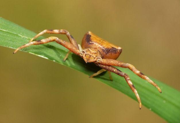 Pięknie pozująca samiczka.